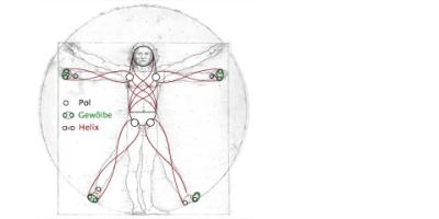 Spiraldynamik® von Kopf bis Fuß